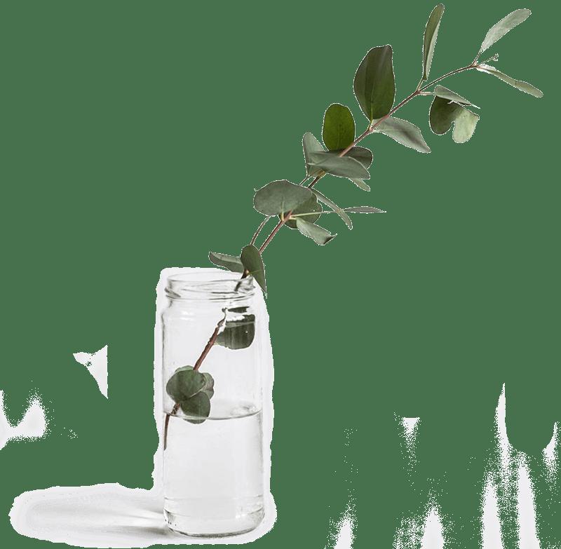 Planta en una botella de agua